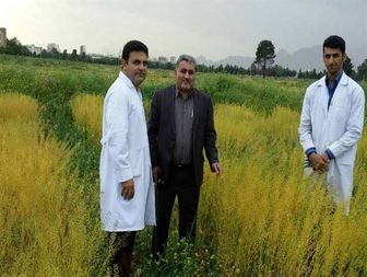 پروژه کاملینای دانشگاه رازی گزینه ای جدی برای کاهش واردات روغن خوراکی کشور است