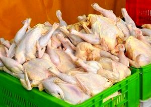کشف مرغ فاسد از یک مرکز عرضه فرآوردههای گوشتی در البرز