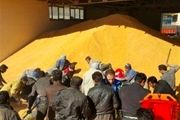 توزیع گسترده برنج، روغن و تخممرغ با قیمت مصوب