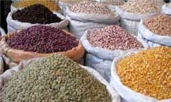 عدس از برنج هم گرانتر شد