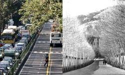 تصویب طرح یک فوریتی حفظ درختان خیابان ولیعصر