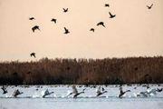 شیوع آنفولانزای فوق حاد پرندگان