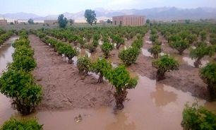 پرداخت ۴۱۱ میلیارد تومان به کشاورزان خسارتدیده