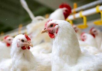 دستور اکید روحانی به دو وزارتخانه برای کنترل قیمت مرغ