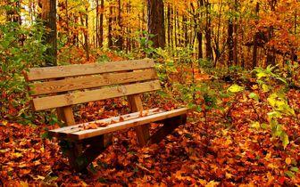 چرا در فصل پاییز غمگین میشویم؟