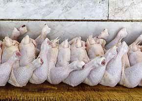 صفهای طولانی برای مرغ ۴۶۵۰ تومانی