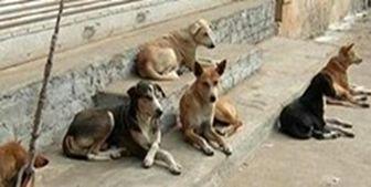 روزانه حدود 30 قلاده سگ جمعآوری میکنیم