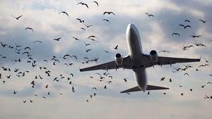 امارات نیز پرواز به کردستان عراق را تعلیق کرد