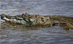 نجات پسر بچه از زیر دندانهای تمساح