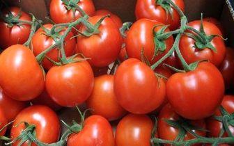 گوجه کیلویی ۳۵۰۰ تومانی، گران نیست