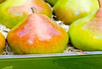 شادترین میوه و خواص آن را بشناسید