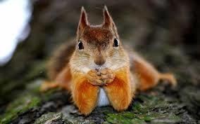 سنجاب حیوان خانگی نیست