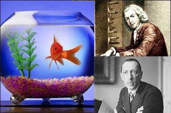 توانایی ماهی قرمز در تشخیص موسیقی