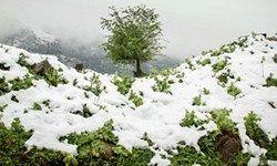 این 5 استان کشور منتظر بارش برف باشند