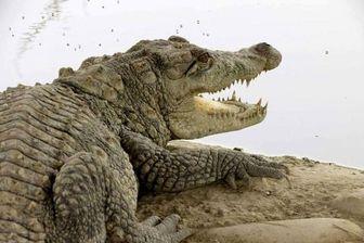 اقدام جالب محیطبانان سیستان و بلوچستان/ عکس