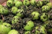 آخرین وضعیت قیمت میوههای نوبرانه در بازار
