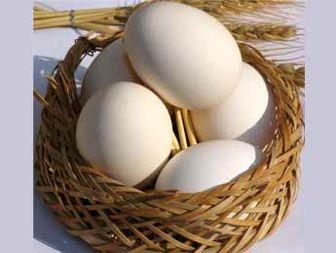 عرضه تخم مرغ کیلویی ۱۳۸۰ تومان