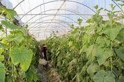 صادرات محصولات کشاورزی راهکار تحقق اقتصاد مقاومتی