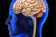 کدام مواد غذایی قاتل مغزتان هستند؟