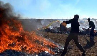 داعش کتاب های موصل را می سوزاند