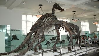 گشت و گذار در موزه تاریخ طبیعی آمریکا با حضور بزرگترین دایناسورها +عکس