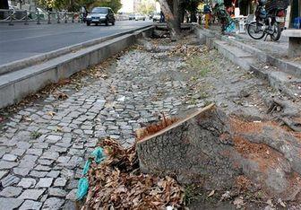 غرس بیش از سههزار درخت چنار در خیابان ولیعصر طی سالهای اخیر