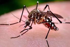 شیوع بیماری ناشی از ویروس نیل غربی در یونان