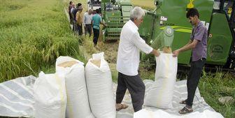 نحوه ترخیص برنج وارداتی تعیین شد + سند