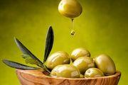 تولید میوه زیتون به ۱۲۰ هزار تن رسید