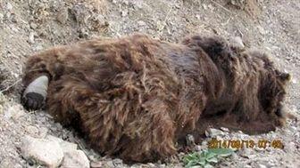کشف لاشه خرس قهوه ای در شمیرانات