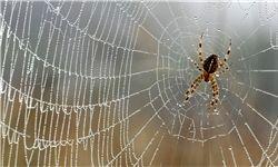 تار عنکبوتی عجیبی که وزن انسان را تحمل میکند/عکس