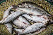 فواید بی نظیر ماهی در دوران بارداری