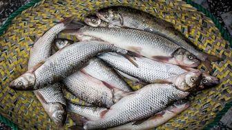 قیمت انواع ماهی در بازار + جدول