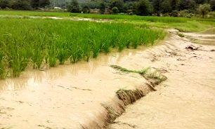 پرداخت ۶۵ میلیارد و ۴۱۳ میلیون غرامت به کشاورزان سیل زده