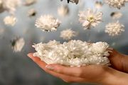 اگر به دنبال برکت در مال, عمر و زندگیتان هستید، بخوانید