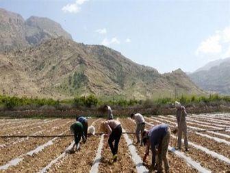 آغاز فصل کشت هندوانه در چرام +تصاویر