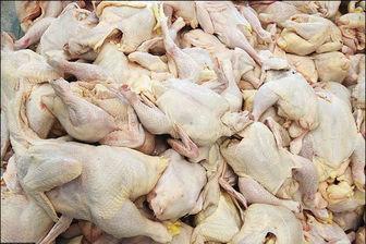 با ذخیره ۱۵۰ هزار تن چرا مرغ هر روز گران تر می شود؟