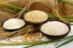 قیمت انواع برنج ایرانی و خارجی در ایام محرم و صفر