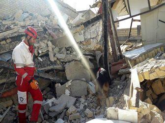سگ های زنده یاب 6 نفر را از زیر آوار زنده خارج کردند