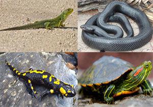قاچاق گونه های حیات وحش در بازارهای غیر رسمی