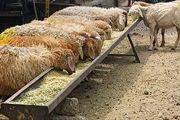 کاهش قاچاق دام زنده در هفتههای اخیر