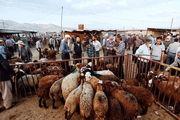 بازار فروش دام در آستانه عید قربان/ گزارش تصویری