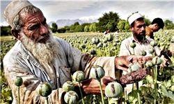 افغانستان کشتزار ۹۰ درصد مواد مخدر جهان