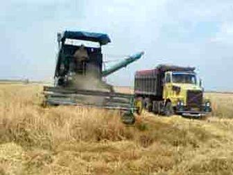دولت از بخش کشاورزی نمره قبولی نگرفت