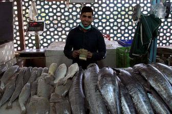 ماهی سفید دریایی کیلویی 140 هزار تومان