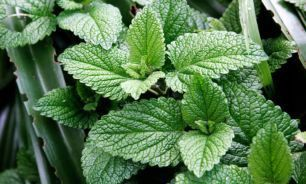 با این ضد آفتاب گیاهی آشنا شوید