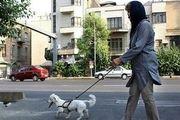 سگگردانها در اماکن عمومی بازداشت میشوند