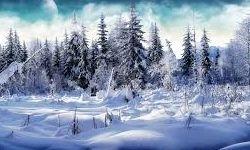 عکسی عجیب از یخ زدن نوک قو در زمستان!