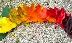 تصاویر دیدنی از پاییز رنگارنگ در پارک ملی نیویورک