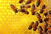 ایران دارای رتبه ۳ دنیا در تولید محصولات زنبور عسل
